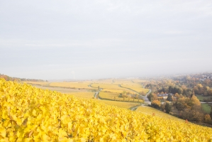 Robert Weil Winery - Germany